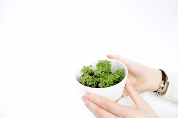 ontdekkingen in de foodwereld